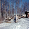 Dr. Roland Lombard's dogs at the house of Red Grainge, Alaska State Champion sled dog races, Soldotna 1964