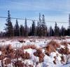 Alaska State Champion sled dog races of Kenai and Soldotna 1964