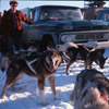 Lombard's sled dogs, Alaska State Champion sled dog races